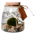 Marimo Aquarium product photo